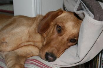 Beau, July 2008