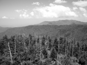 View from Clingman's Dome, Great Smoky Mtn National Park, taken in Black and White mode